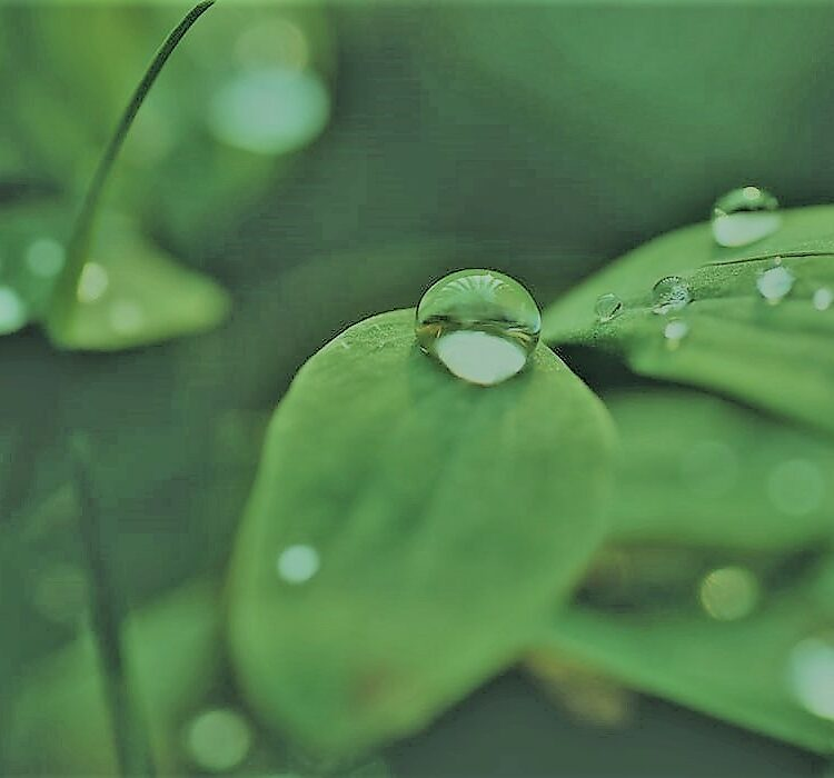 green leaf droplet large neo.jpg